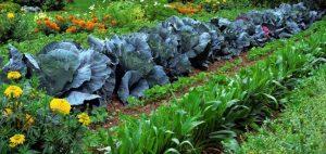 Plentiful Garden