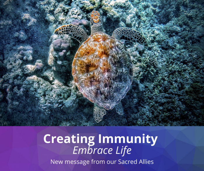 Creating Immunity – From Our Angelic Allies